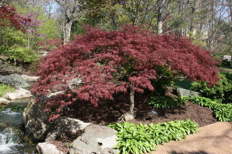 Low Maintenance Backyard Trees : Top Five Low Maintenance Backyard Plants  Master Plan Landscape