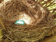 nesting-wildlife-habitat-backyard-birds