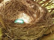 nesting-wildlife-habitat-backyard-birds