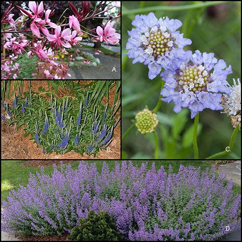 perennials-gardening-landscape design