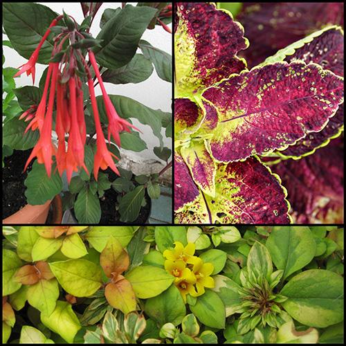 annuals-warm-colors-landscape design