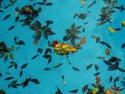 leaves in pool