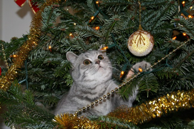 Top 3 Ways To Keep Your Cat Out Of Your Christmas Tree