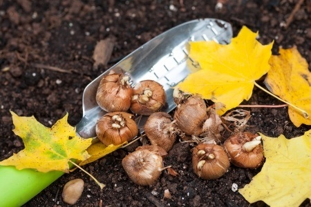 Why is autumn the best time to plant?