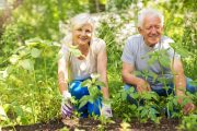 hort therapy for seniors